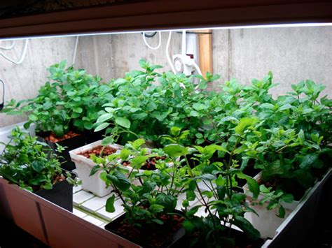 grow herbs indoors herb gardening guide