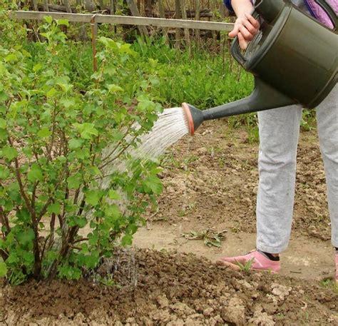 arrosage automatique arrosage goutte 224 goutte arroser jardin sans gaspiller pratique fr