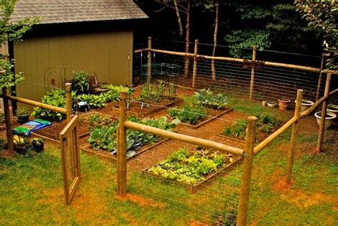 vegetable gardensnever thought  putting  wire