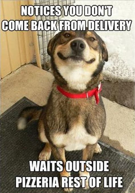 Smiling Dog Meme - smiling memes image memes at relatably com