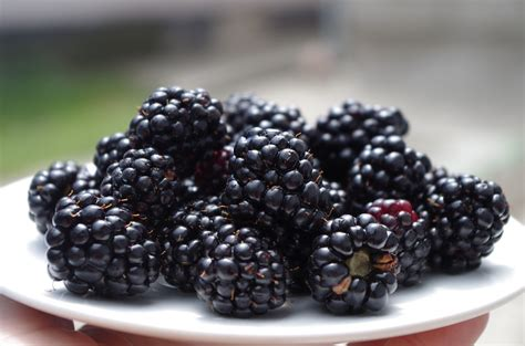 free photo blackberries on a plate black free image