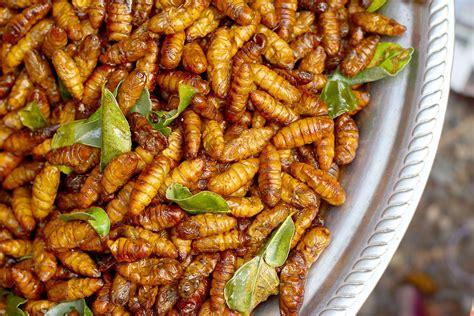 insectes cuisine mangera t on des insectes en 2050 up le mag