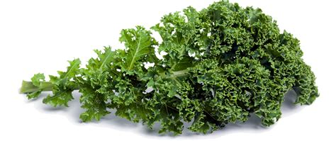 vegetables kale 5 fruits and vegetables to include in your children s diet