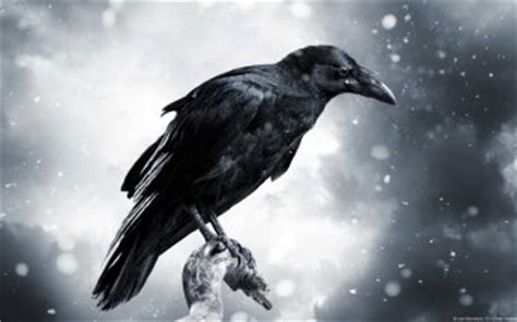 raven wallpaper abyss 40 raven hd wallpapers backgrounds wallpaper abyss