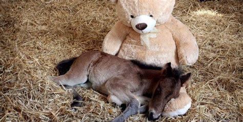 wann kommen katzenbabys teddy statt mutti stofftier tr 246 stet waisen fohlen bei