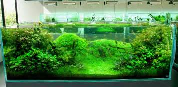 japanese aquascape artist essentially the craft of aquascaping is landscape