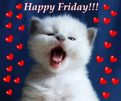 happy friday cat pictures   images  facebook