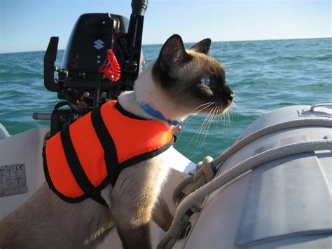 bailey boat cat lands a book deal adlard coles nautical - World Cat Boats Any Good