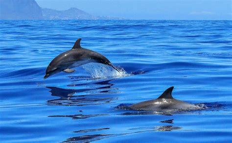 los animales marinos marine animales marinos qu 233 son clasificaci 243 n alimentaci 243 n amenazas