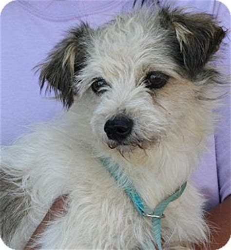 small dogs for adoption near me pet not found