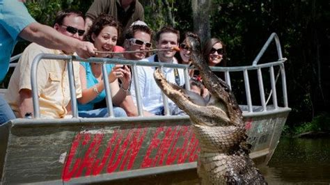 gator boat tours near me honey island sw night tour new orleans expedia