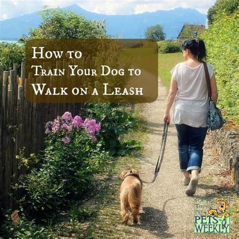 how to dogs to walk on a leash how to your to walk on a leash