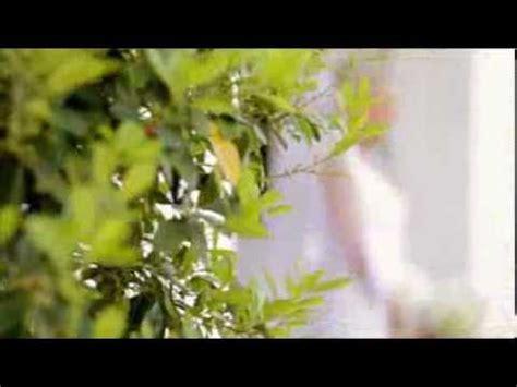 Wedding Song Josh Groban by Josh Groban When You Say You Me Wedding