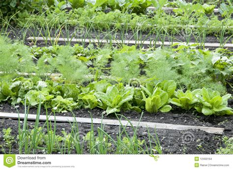 Allotment Garden Bed Stock Images Image 12400164 Allotment Vegetable Gardening