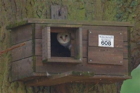 barn owl house plans build a barn owl house barn owl box plans http homelandsbedandbreakfast blogspot