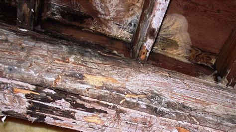 Decke Rot by Rotten Deck Repair Service In Vancouver Arbutus Vinyl