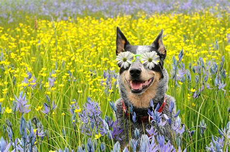 puppies and flowers dogs and flowers a gallery on flickr