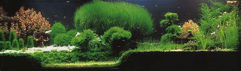 Style Aquascape by 7 Aquascaping Styles For Aquariums The Aquarium Guide