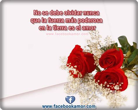 imagenes de rosas blancas con frases top hermosas flores con images for pinterest tattoos