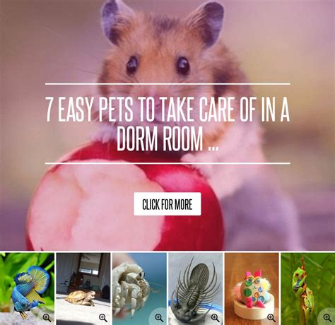 easiest dogs to take care of 7 easy pets to take care of in a room