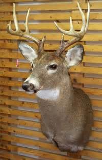 Deer Head Deer Mounts For Sale On Craigslist Myideasbedroom Com