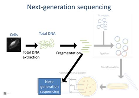 the templates for next generation sequencing are flash card illumina genome analyzer v s sanger sequencing 有勁的生技
