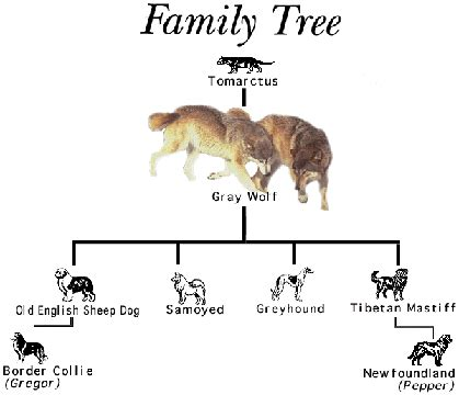 history of dogs wolf history and genetic diversity