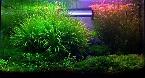aquascaping shop aquascaping shop 28 images 2196 best images about