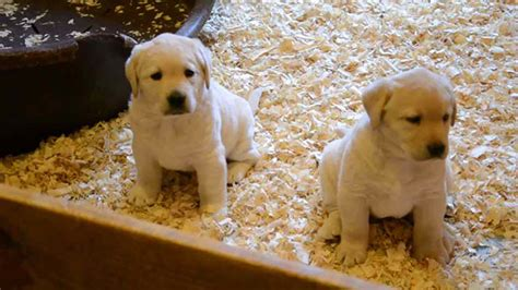 pet store that sells puppies things to consider before bringing a pup home from the pet store