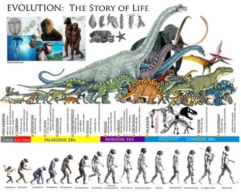 story of life evolution 1783704446 evolution the story of life the prehistoric eras dinosaur timeline zsite59 interesting