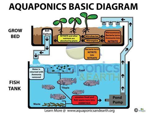 aquaponics diagram basic aquaponics set up homesteading dreams