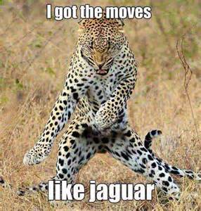 Jaguar Ticker Lol Jaguar Quote Tigers Cheetahs Lynx