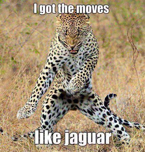 lol jaguar quote tigers cheetahs lynx