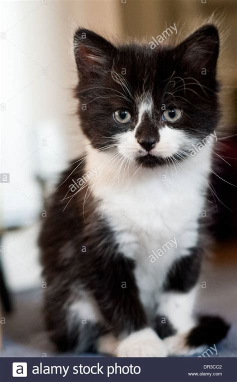 a black and white kitten with green sitting on