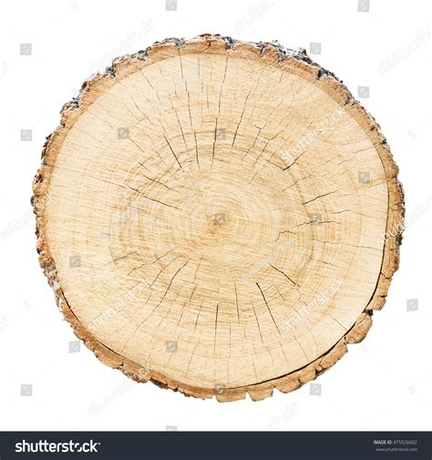 cutting down a tree in sections cross section cut wood tree trunk stock photo 475526602