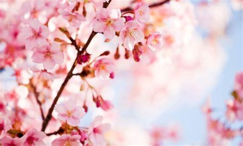 fiori della primavera fiori annunciano la primavera ecco quali sono leitv