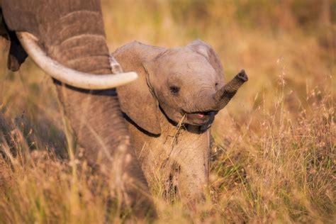 wallpaper elephant cute cute baby elephant wallpapers