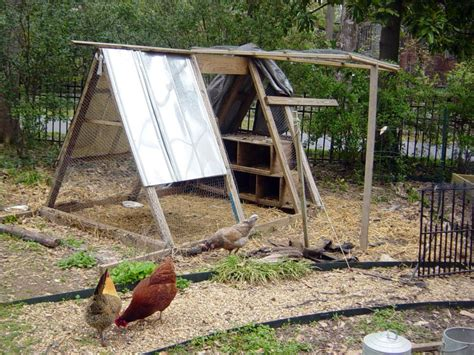 backyard flock chicken coops for backyard flocks hgtv