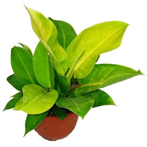 office plant decoration kl 100 office plant decoration kl succulents u0026
