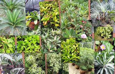 decorative plants with name in india ornamental garden plants ornamental grass plants