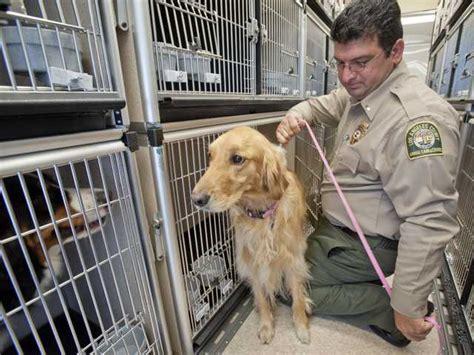 golden retriever puppies santa clarita county receives four new trailers for emergency animal transportation