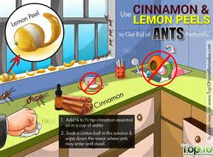 lovely How To Get Rid Of Ants In The Bathroom #3: get-rid-of-ants.jpg