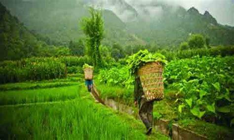 Jangan Bingung Memulai Usaha jangan hancurkan peluang usaha pertanian karena 3 hal ini