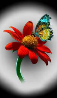 600x1024 Colorful Butterfly Red Flower Galaxy Tab 2 Wallpaper