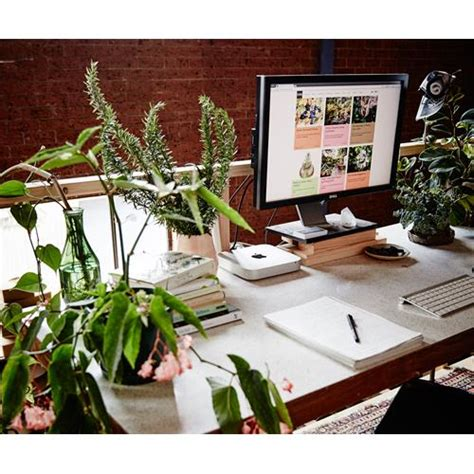 best plants for desk the best indoor plants for australian offices homes