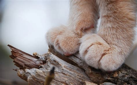 wallpaper cat paw cat close up photo hd wallpaper 2 animal wallpapers