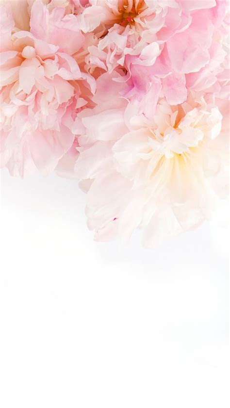 wallpaper for iphone with flowers wallpaper pink flowers wallpapers pinterest