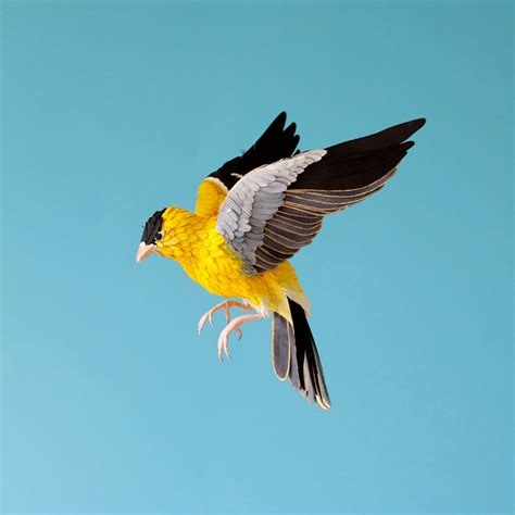 Birds With Paper - new lifelike paper birds by diana beltran herrera colossal