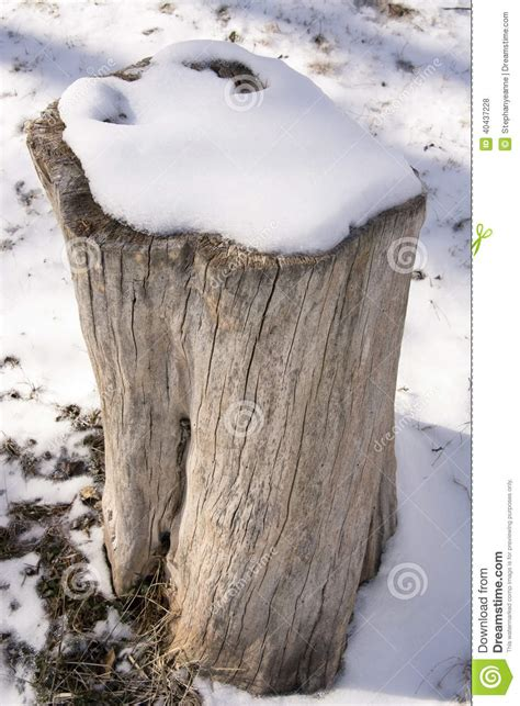 what is a tree trunk covered with 4 letters tree stump in snow stock photo image of clear