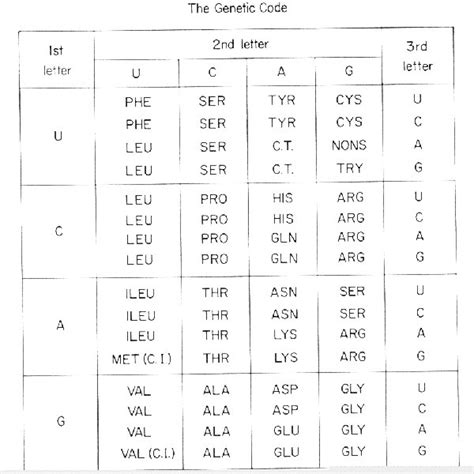 Genetic Code Table by Fig9